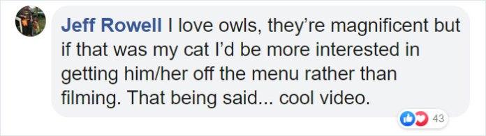 an owl intimidates a cat