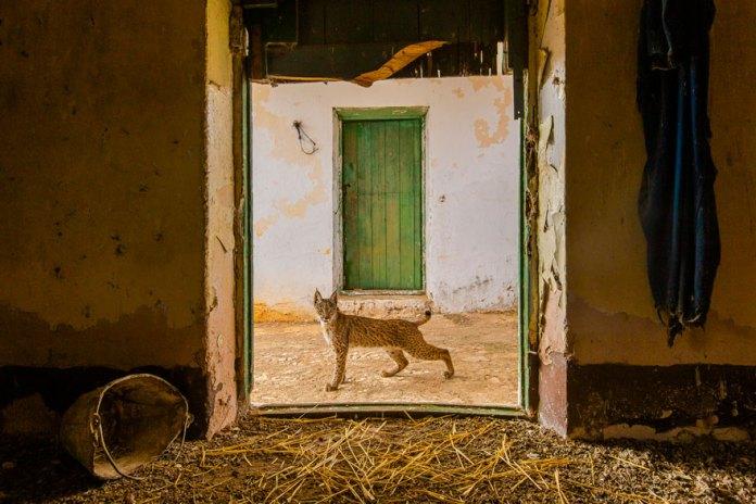 Wildlife Photographer Contest -2021