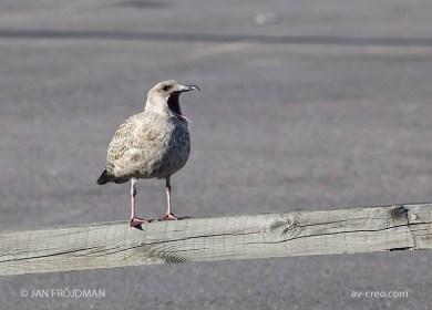 Bird_8885