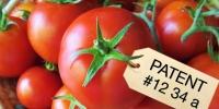Tomato patent