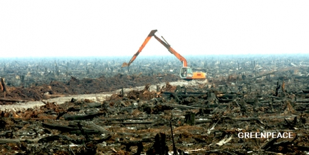 Stop subsidising biofuel rainforest destruction