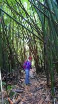 Bambouseraie 2