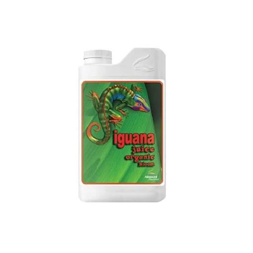 Iguana Juice Bloom