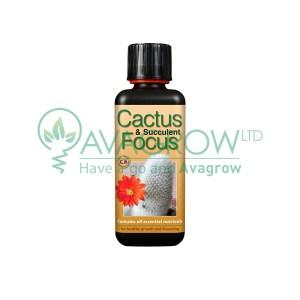 Cactus Focus 100 ML