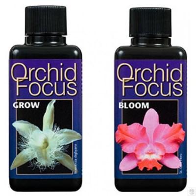 Orchid Focus
