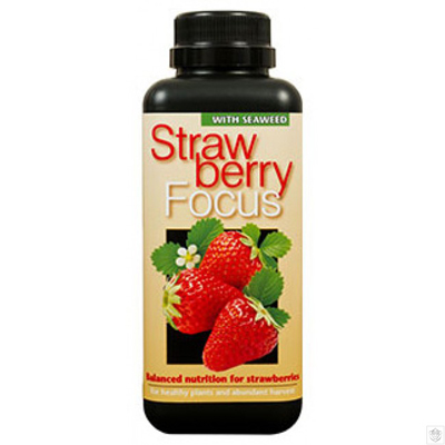 Strawberry Focus
