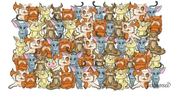 optical illusions find cat # 61