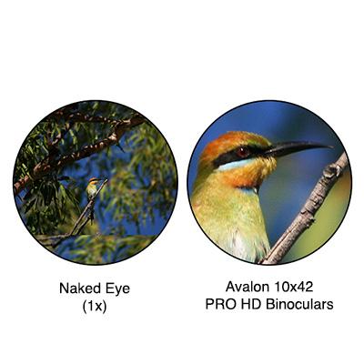 Magnification 10x42 PRO HD Binoculars