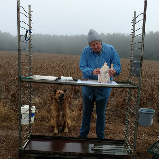 There are distinct advantages to being a farm dog, especially on chicken processing day!