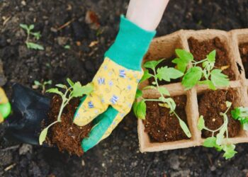 How To Garden With Chronic Back Pain: Some Helpful Tips from Our Pros!