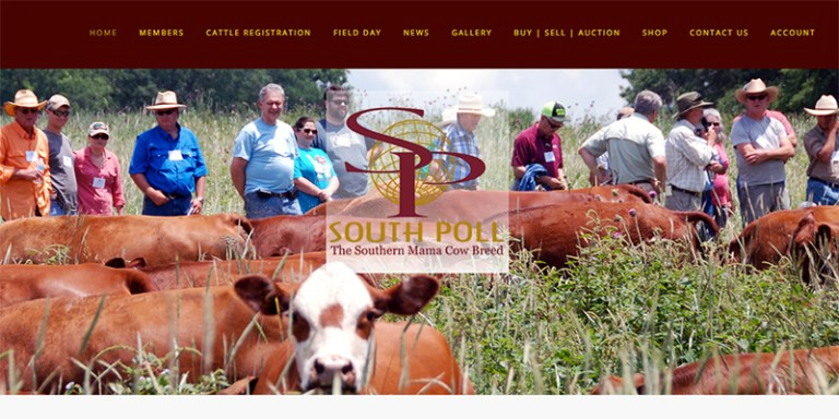 Avalon Web Designs | SouthPoll.com ~ South Poll Grass Cattle Association