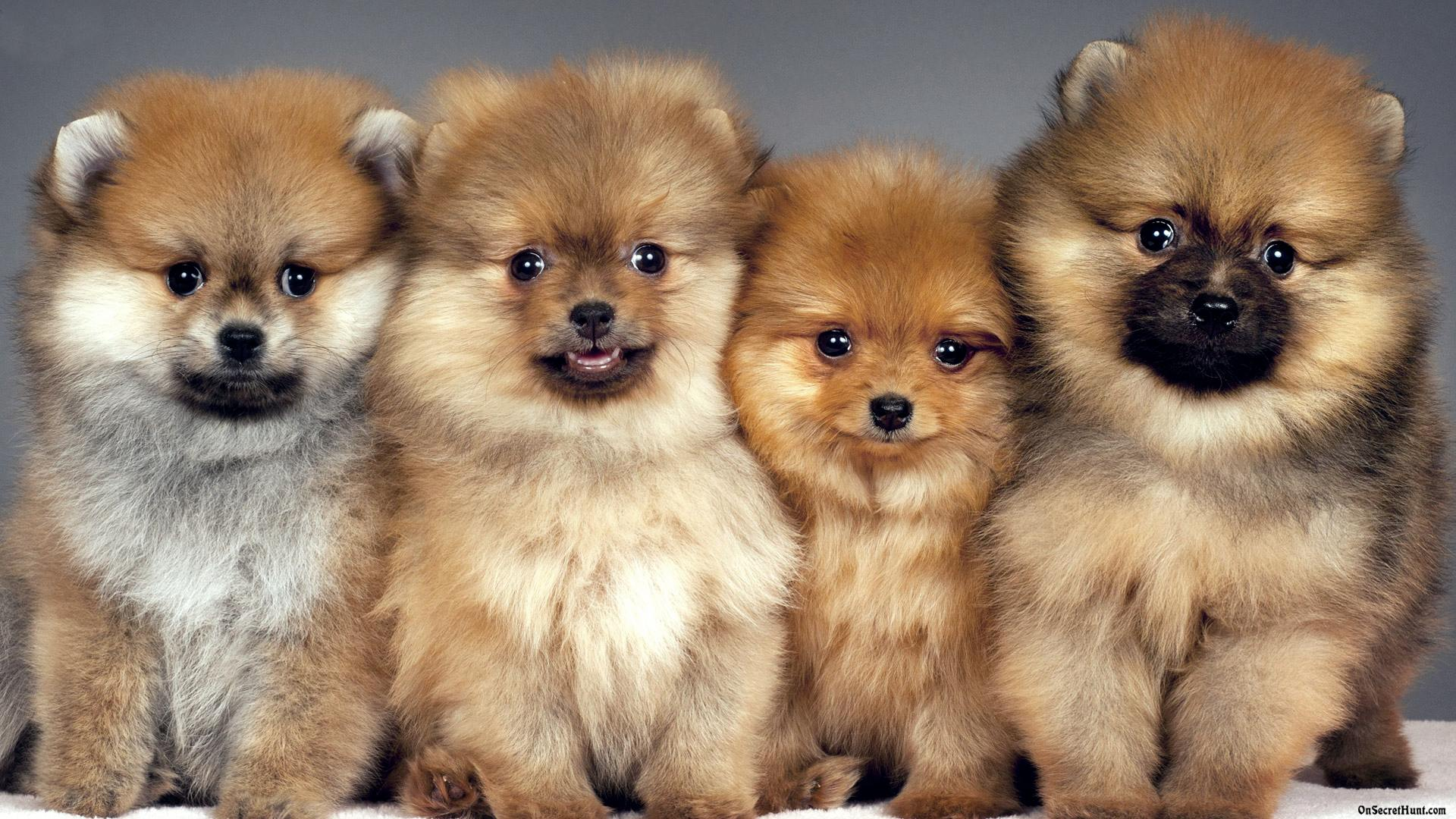 Cute Little Puppies Wallpapers Android Apps On Google Play 1920x1080