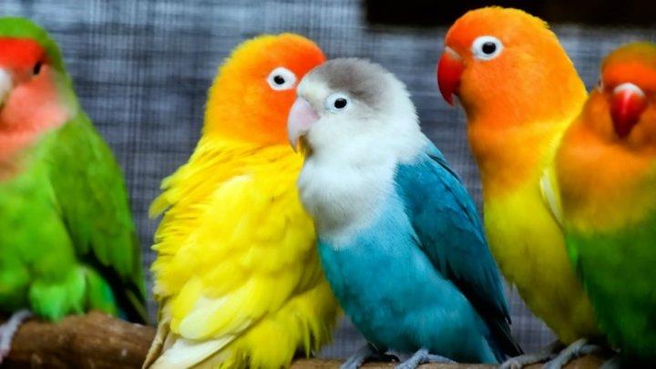 Image Of Love Birds Hd Wallpapersharee Com