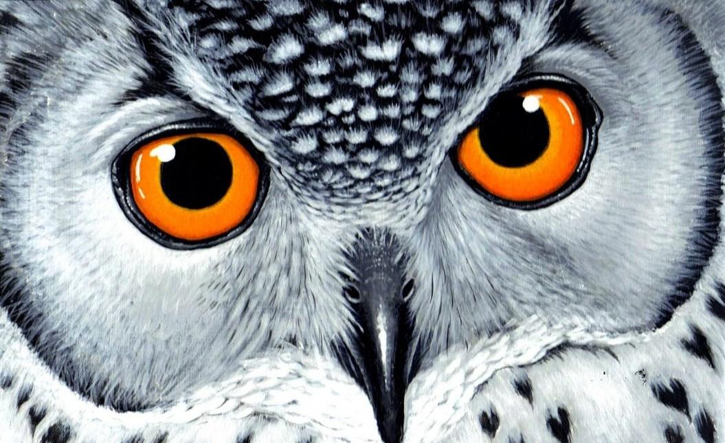 810+ Gambar Wallpaper Burung Hantu Gratis Terbaik