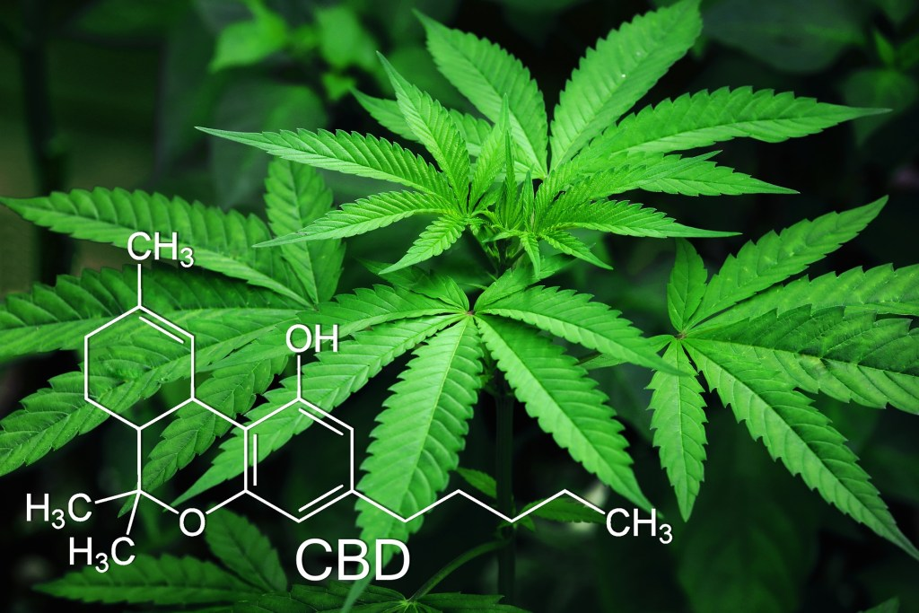What is CBD and the Endocannabinoid Systm