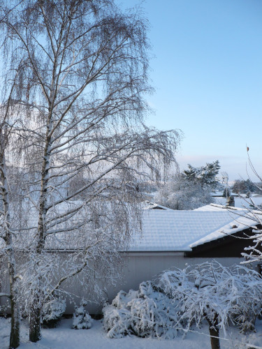 bouleaux-neige-2010.jpg
