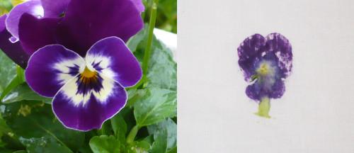 pensee-sauvage-violette-tissu.jpg