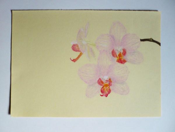 orchidee-pastel-sec-dessin.jpg