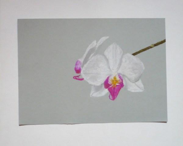 orchidees-pastel-sec-dessin.jpg