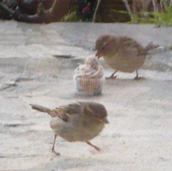 cupcake-oiseau.jpg