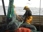Marins pêcheurs sur un chalutier