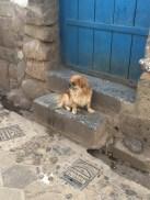 A furry friend in San Blas