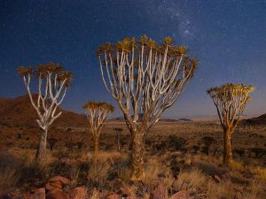 Quiver Trees, Namibia (Foto da National Geographic)