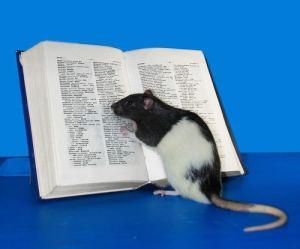 rato livro