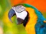 papagaio010803
