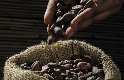 cocoa-beans-499970_500