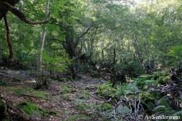 Bosque Carlac