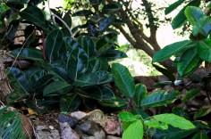 les plantes grasses côtoient de très prés les cactus