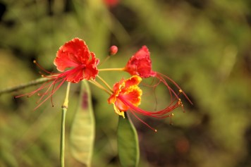 de jolies fleurs qui semblent si délicates...