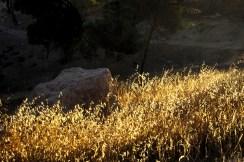une pépite au milieu de l'or