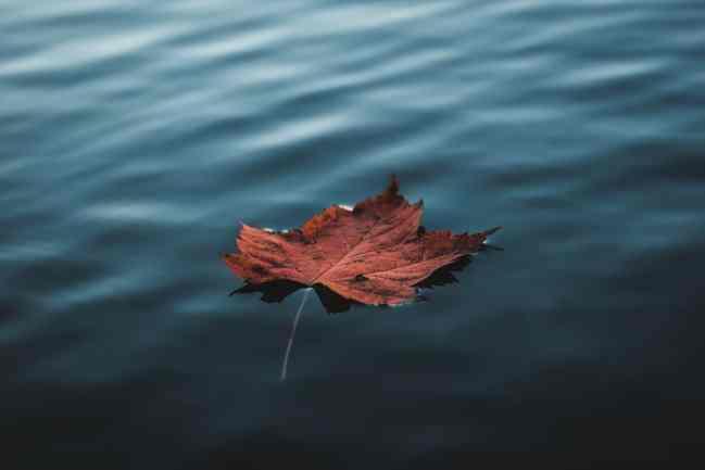Photos d'automne