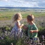 Aventuri in cinci In lanul de lavanda cu Atelierele Bucuriei