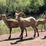 Leaving Denver | Colorado Trail - Average Hiker