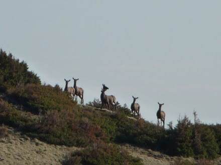 Elk Visitors