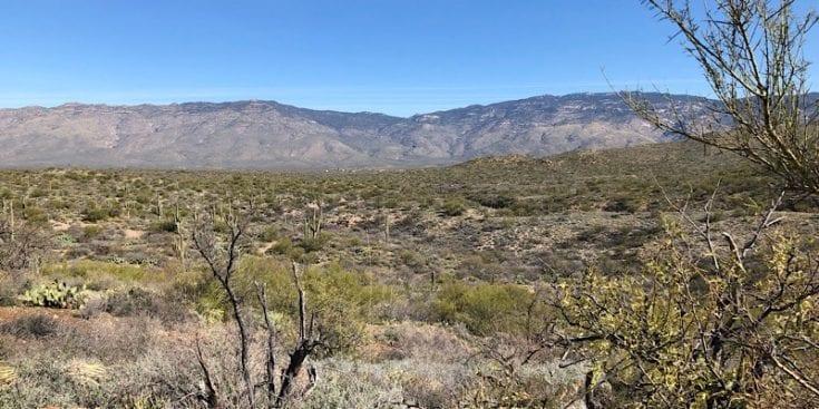 Desert Garden Near Mica Mountain on the AZT