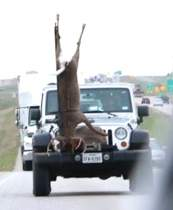 jeep with deer on front
