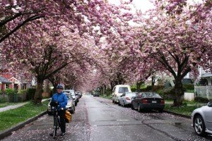 post - bike the blossoms1 2