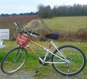 This 40-year-old Raleigh has been riding the Osprey Loop dog friendly trail for 40 years!
