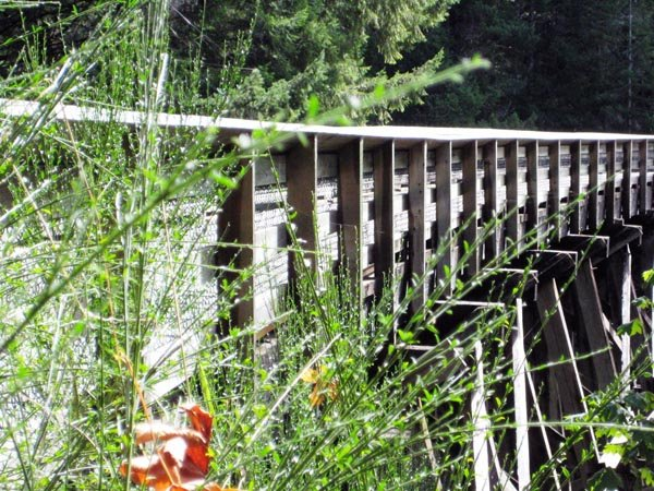 Old but brilliantly constructed bridges tell the tale of the history of the Galloping Goose Trail. It's fun to imagine trains thundering across