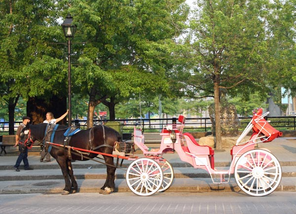 Another way to enjoy the sights of Montreal! Horse and carriage rides on the Rue de la Commune Est in Montreal