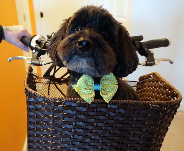 We sometimes take our dogs along for the ride, and when they get tired they ride in their pet baskets. Read about the best bike dog baskets here