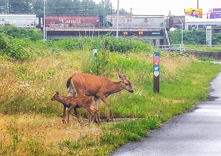 Expect to see wildlife! Photo courtesy of Alan Wallis