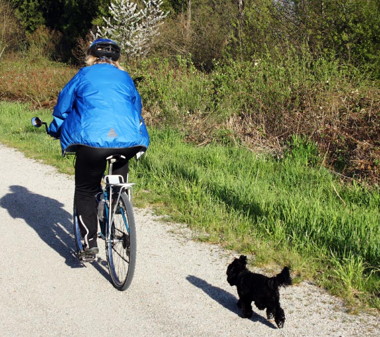 One of the advantages we discovered about taking Billy along on a bike ride - when we found ourselves on a quiet trail, we could let Billy stretch his legs and enjoy a run! pet bike basket