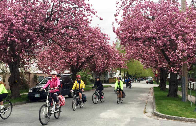 The Bike the Blossoms Ride offers the opportunity to cycle along a well-marked route, enjoying Vancouver's new cherry blossoms, in the company of many other relaxed and happy cyclists