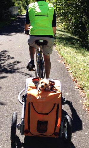 DoggyRide Bike Trailer. 5 of the Best, Safe Dog Bike Baskets - Front, Rear, and Trailer