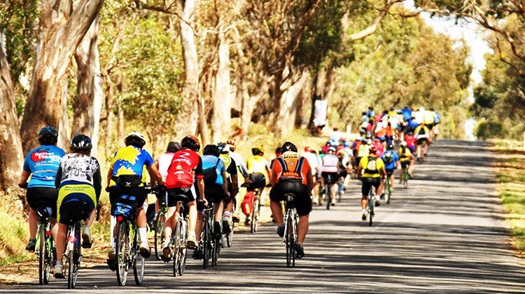 Join Australia's Biggest Bike Riding Festival: The Great Victorian Bike Ride. During the 2018 Great Victorian Bike Ride, cyclists will enjoy plenty of tree-lined shade in the north east and Murray regions. Photo credit: Bicycle Network